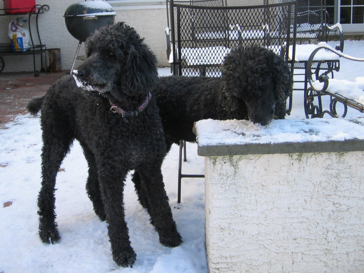 Bob and Sam in the snow-sophie-bob-snow.jpg