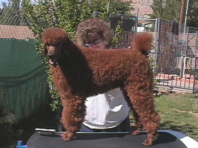 Favorite poodle color?-sunday-04-08-011.jpg