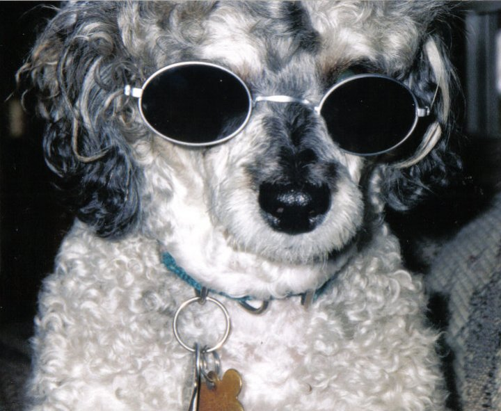 Taz was my greatest that no other dog I have after will equal RIP-taz2.jpg
