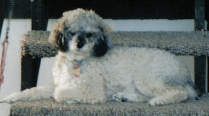 Taz was my greatest that no other dog I have after will equal RIP-taz4.jpg
