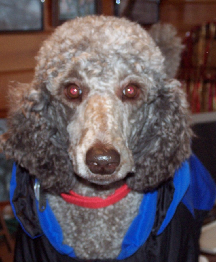 petstore=tons of people tell me Lou is the cutest dog they've ever seen!LETS POST PIX-teddy-20face-20closeup.jpg