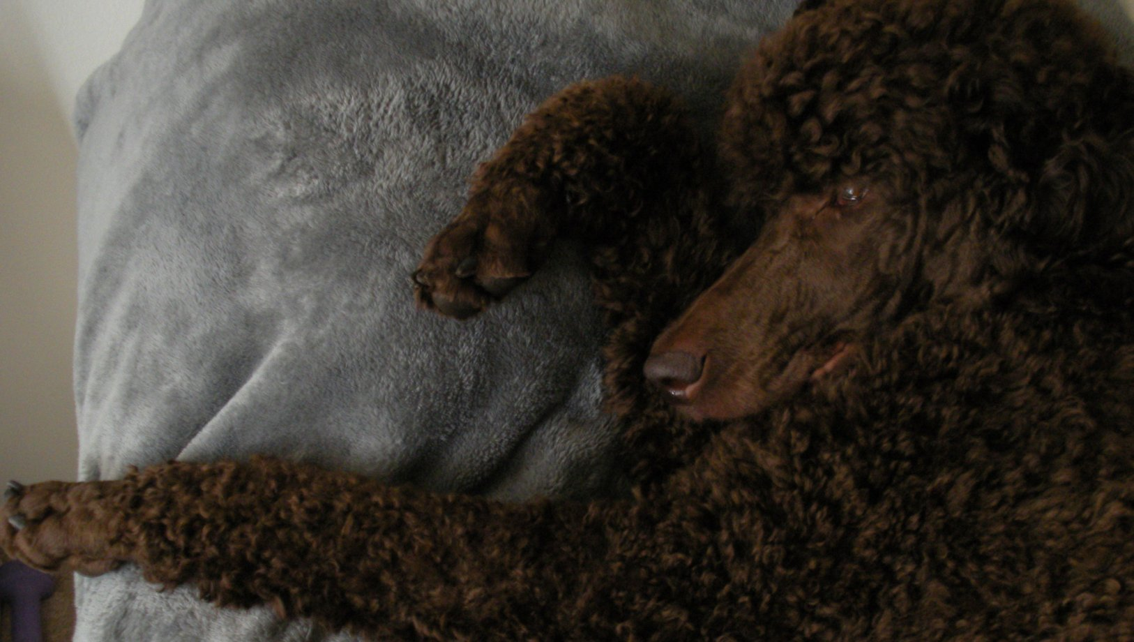 The Brown Poodle Thread-way-you-rest-your-paws-001.jpg