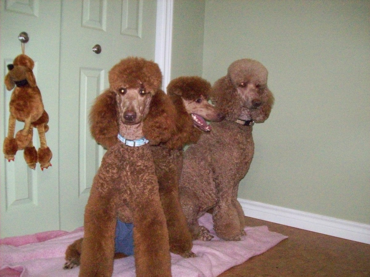 The Red Poodle Thread-three-muskateers.jpg