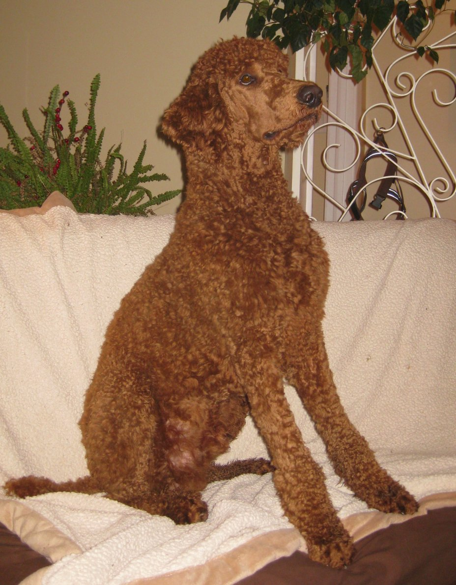 The Red Poodle Thread-unan.jpg