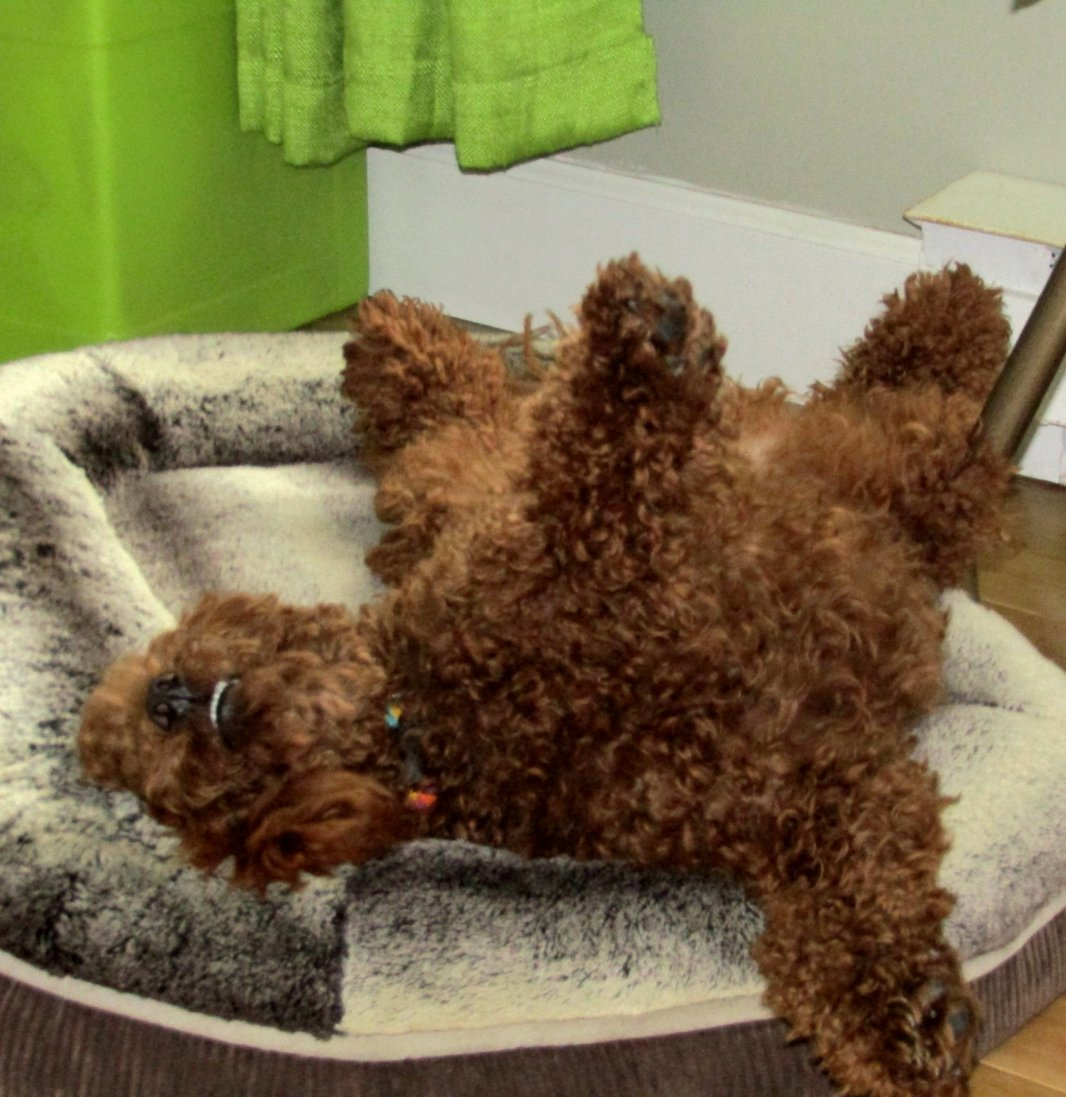 The First 52 Weeks of Lupin-upsidedowndog-14march2017.jpg