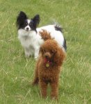 Poppy and Sophy went for a lovely walk today.jpg