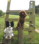 They even posed nicely on the stile.jpg
