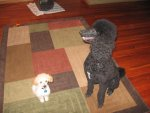 Charlie and Shadow 002.jpg